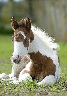 100 Best Cute Baby Horses Images Baby Horses Horses Animals Beautiful