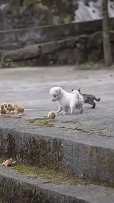 Little Besties - Tiere / Animals - Adorable Animals Cute Little Animals, Cute Funny Animals, Funny Dogs, Funny Birds, Very Cute Puppies, Puppy Play, Cute Animal Videos, Baby Dogs, Doggies