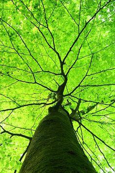 I ♥️ trees.