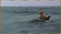 イルカにのったワンワン。