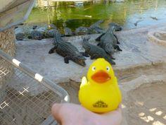 Djerba - Crocodiles