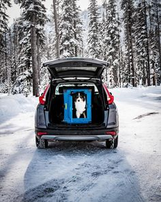 it's hard to not look cool when you roll up like this 👌 ———————————————————— What is your dream dog hauler? Dog Car Accessories, Dog Crates, Look Cool, Dog Mom, Dreaming Of You, Cool Stuff, Dogs, Life, Instagram