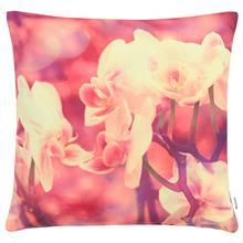 Reyna Collection - Decorative Pillow