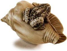 19th Century Japanese Carved Ivory Toad on Seashell Netsuke Signed Tomomasa