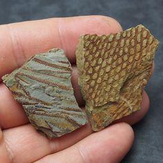 Dating rotsen met fossielen