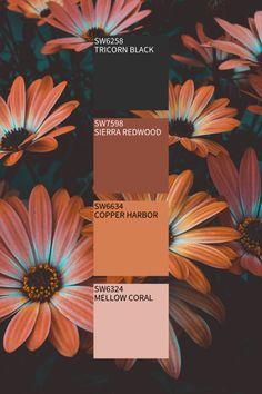 Fall Color Schemes, Color Schemes Colour Palettes, Paint Color Schemes, Hex Color Palette, Nature Color Palette, Fall Paint Colors, Fall Fashion Colors, Autumn Painting, Halloween Coloring