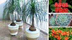 Conheça as melhores plantas para colocar dentro de casa e dar um UP na decoração de ambiente. Além de bonitas, estas plantas necessitam de poucos cuidados. Up, Plants, Gardening, Gardens, Vegetable Gardening, Plant Box, Plants Indoor, Flowers, Houses