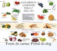 Fica Cãomigo: Verduras e legumes permitidos para cães