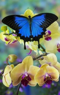 Lookit! My Butterfly...on some beautiful orchids!