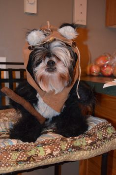 Hood/Fur Dog Halloween Costume Black Longer by sewdoggonecreative