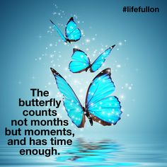 Just like the butterfly, make every moment count ... #lifefullon #thesecret #loa #instagram #lawofattraction #aussielifecoach