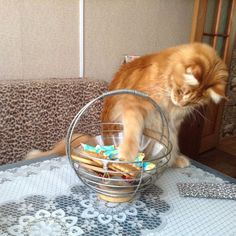 TOP 18 Funny Cats and Kittens Pictures | Funny Animals, Funny Cat | DomPict.com