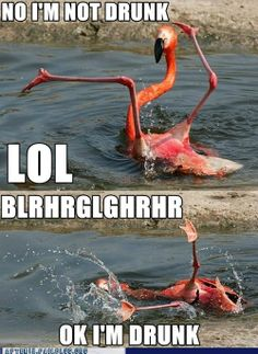 """Crunk Critters: """"Check Me Out, I Can Flamingo Dance!"""""""