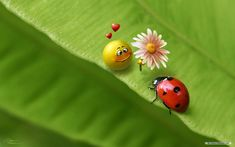 Funny Ladybugs Nature Wallpaper Animal HD Desktop Mobile Free Wallpaper Res: Added on May 06 Tagged : Wallpaper Animal at MoshLab Wallpaper Free Fall Wallpaper, 3d Desktop Wallpaper, Live Wallpaper For Pc, Butterfly Wallpaper, Wallpaper Free Download, Nature Wallpaper, Print Wallpaper, Free Computer Backgrounds, Br Games