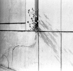 nicoonmars:  Very Determined Flower by Maya Hiort Petersen