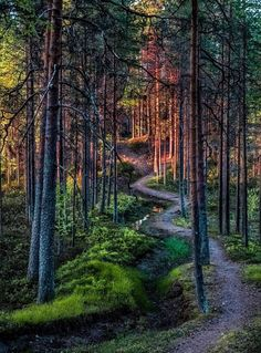 Winding path in the forest (Finland) by Asko Kuittinen cr. Forest Path, Magic Forest, Deep Forest, Forest Tattoos, Paradise On Earth, Nature Aesthetic, Walk In The Woods, Natural Wonders, Nature Photos