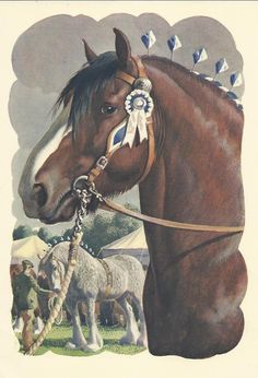 Shire horse stallion by Charles Tunnicliffe