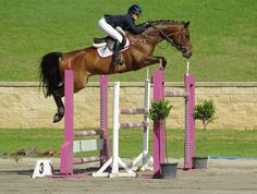 I cant even begin to describe how amazing this horse is.. Popeye <3