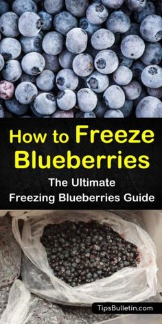 Blueberries have a short growing season and a short shelf life. You can use a variety of jam recipes to use up your excess berries or you can learn how to successfully freeze the fruit to enjoy all year long. Blueberry Pie Recipes, Blueberry Picking, Blueberry Season, Blueberry Cookies, Jam Recipes, Fruit Recipes, Blueberry Farm, Freezing Fruit, Fresh Eats