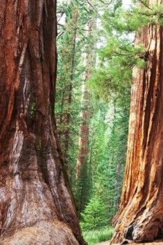 Sequoia National Park, with glowing millipedes and the world's largest trees!