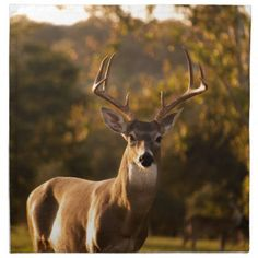 Stunning wildlife portrait of a deer shot during golden hour- best animal photography examples The animal world is full of amazing photo opportunities. We've come up with 30 unique animal photography examples for you. Animals Images, Animals And Pets, Baby Animals, Funny Animals, Cute Animals, Wild Life Animals, Animals In The Wild, Nature Animals, Amazing Animals