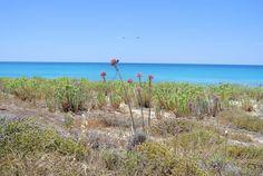 Thorns in Agios Ioannis Beach Agios Ioannis Beach, Exotic Beaches, Greek Islands, More Photos, Greece, Water, Outdoor, Beautiful, Greek Isles