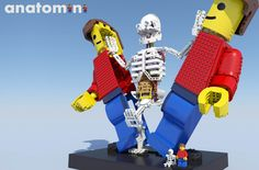 Anatomini: Human anatomy captured in the iconic LEGO Minifigure By 2019 humans will be outnumbered by LEGO Minifigs. Yet we don't know much about the little yellow fellow. Until now… Introduction Anatomini has, like humans, an anatomically correct skeleton with its main organs and blood vessels captured in a 10:1 scale minifigure body. All built with standard LEGO bricks. The skeleton can smoothly be revealed by sliding the outer body parts to the left and right. Why? What is the most…