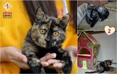 Μόκα, το νέο μέλος της οικογένειάς μας - Kalli's blog