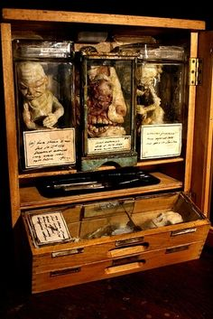 Cabinet of Curiosities. These 17th-century cabinets were filled with preserved animals, horns, tusks, skeletons, minerals, and other types of objects. Often they would contain a mix of fact and fiction, including apparently mythical creatures.  The specimens displayed were often collected during exploring expeditions and trading voyages.