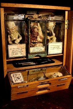 19th century anatomy cabinet