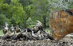 Image result for vulture restaurant