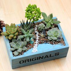 Petits pots créatifs avec des succulentes! 20 idées inspirantes…