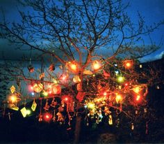magical-trees-19
