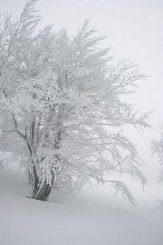 Winter Love, Winter Is Coming, Winter Snow, Winter Christmas, Winter Photography, Nature Photography, Winter Magic, Winter Scenery, Snow Scenes