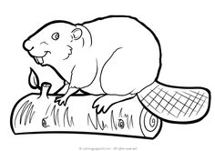 Beavers 5 | Coloring Pages 24 Printable Coloring Pages, Coloring Pages For Kids, Beaver Drawing, Beaver Animal, Flying Cat, S Alphabet, Page Online, Online Coloring, Beavers