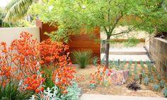 Garden ideas, landscape ideas, Drought Tolerant, Full Sun, Part sun…
