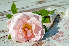 Opus Fantaisie Le Volant (The Shuttlecock) Flower Rose Images, Flower Photos, Romantic Good Morning Messages, Wholesale Roses, Rosa Rose, Rose Essential Oil, Ways To Relax, Blossom Flower, Numerology