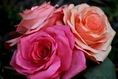 Coffee Filter Rose Bouquet | by Ambridge Studio