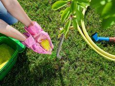 nawożenie drzew owocowych wiosną