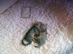 cuddle cuddle cuddle