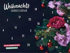 Weihnachtssammelsurium – Tollwasblumenmachen.de