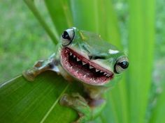 vicious meat eating frog experiment covered up by government. wut