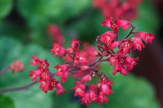 pink and coral flowers - Google Search