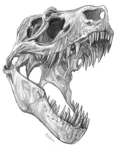 'T-rex skull' Sticker by Ash Dadoun T-rex skull Stickers by Ashley Dadoun Animal Skull Drawing, Animal Skulls, Animal Drawings, Art Drawings, Cool Skull Drawings, Pencil Drawings, Dinosaur Sketch, Dinosaur Drawing, Dinosaur Art
