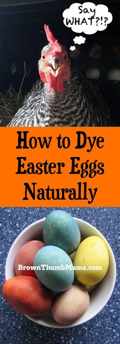 You can dye Easter eggs naturally, with stuff that's already in your kitchen. No more tablets that stain everything--just beautiful, natural Easter eggs.