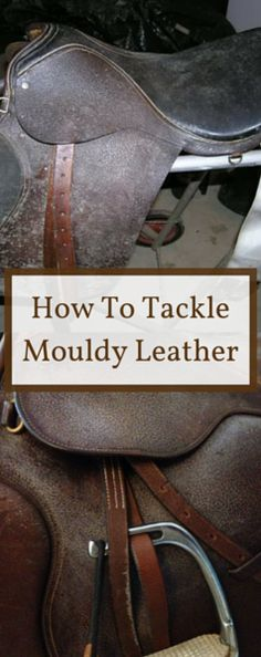 Check out our tips on ridding your precious leather possessions of pesky mould and mildew with the help of Pickstones leather care. Say goodbye to mould spores once and for all! Horse Riding Tips, Horse Tips, Cleaning Mold, Cleaning Hacks, Leather Tooling, Leather Bag, Leather Jacket, Leather Tutorial, Horse Saddles
