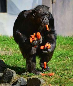 Someone likes carrots...