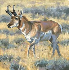 Sunlit Sage - Antelope Original Painting by Tom Moen