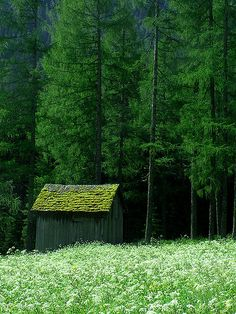 ♂ Green nature, green earth, green rooftop #green
