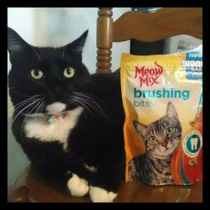 #ad My Favorite Feline Loves Meow Mix®Brushing Bites available at Walmart and I Love The Results! #ad ~ Deliciously Savvy